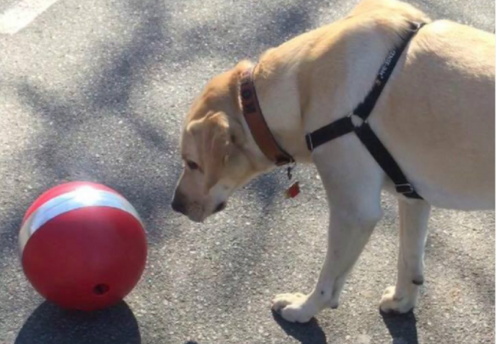 Automated Dog Ball