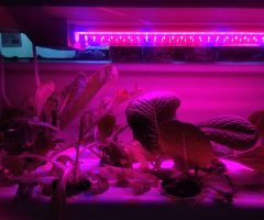 Part II: My Hydroponics Setup and Experience