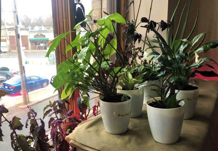 House Plant Catalog