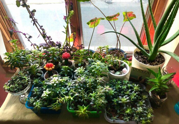 Succulent Sundays