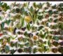 Succulent Sundays: New Arrival of 117 Succulent Cuttings